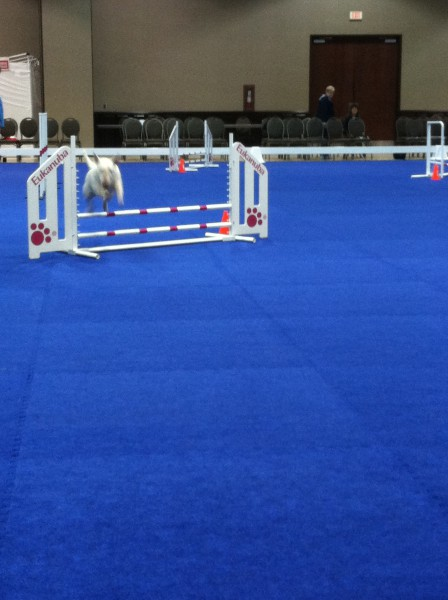 Eukanuba Hall in action