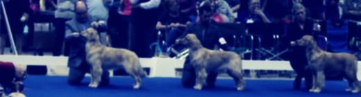 DOG SHOW AT ROBERTS CENTRE
