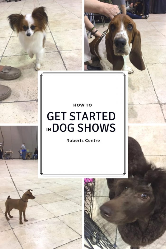 STARTED IN DOG SHOWS