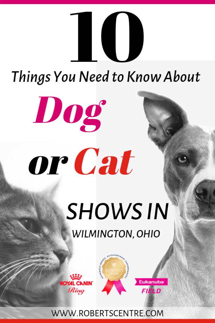 Dog or cat show planning